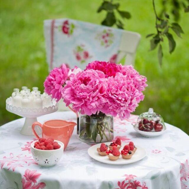 цветение пионов в саду